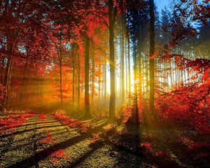 Sunshine-through-the-forest-trees-stunning